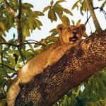 לג'ונגל באהבה - צילום: פרג' פרי